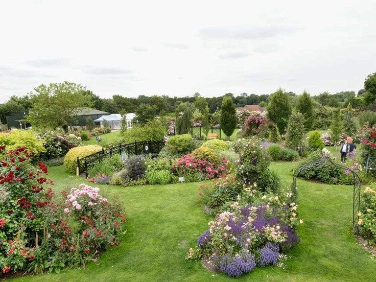 Commercial expansion for Peter Beales Roses