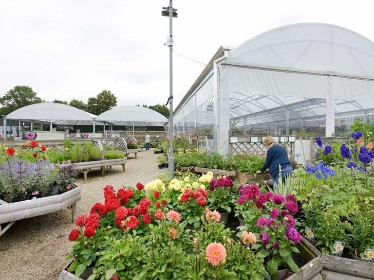 peter-beales-garden-centre